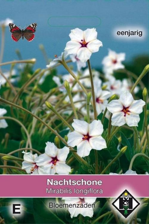 Longiflora Four o'clock flower Mirabilis seeds
