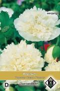Cream Paeony - Papaver paeoniflorum seeds