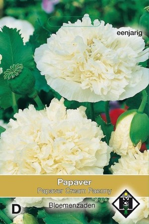 Cream Paeony - Papaver...