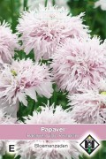 Lilac Pompom - Papaver somniferrum zaden