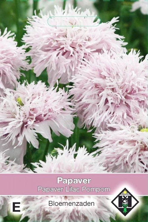 Lilac Pompom - Papaver somniferrum seeds