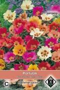 Bella Vista Portulaca seeds