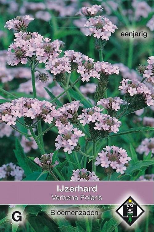 Verbena Polaris Rigida - IJzerhard zaden