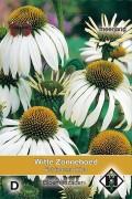 Alba Coneflower Echinacea seeds