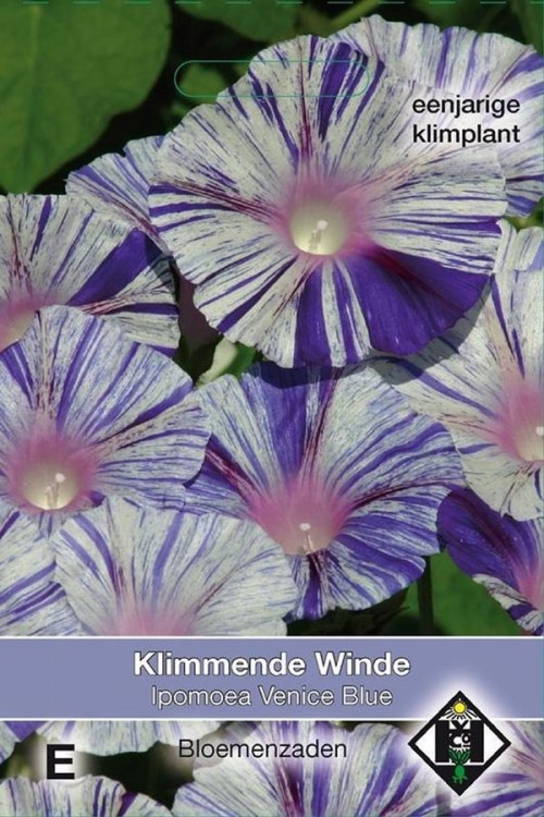 Venice Blue Morning Glory Ipomoea seeds