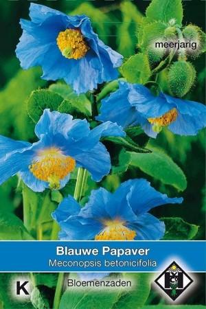 Blauwe Papaver - Meconopsis...