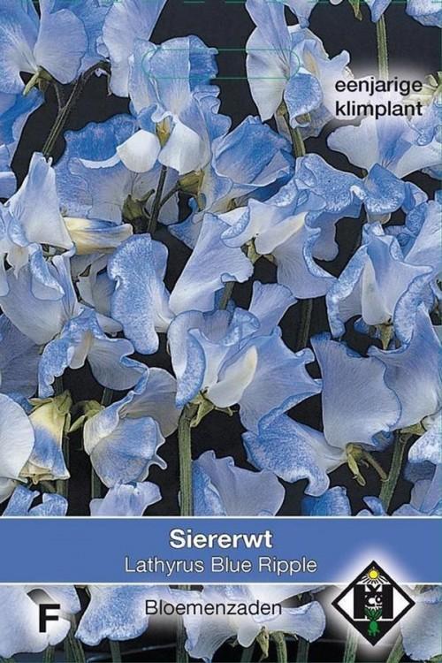 Blue Ripple Siererwt Lathyrus zaden