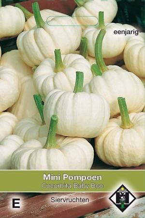 Baby Boo Cucurbita pumpkin...