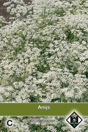 Pimpinella anisum Anijs zaden