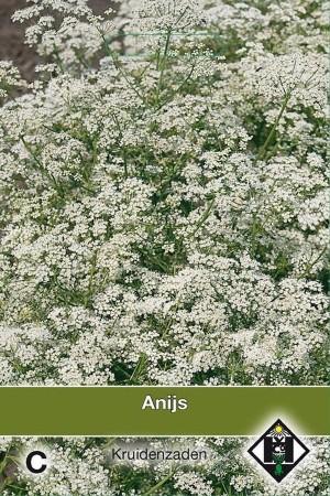 Pimpinella anisum Anise seeds