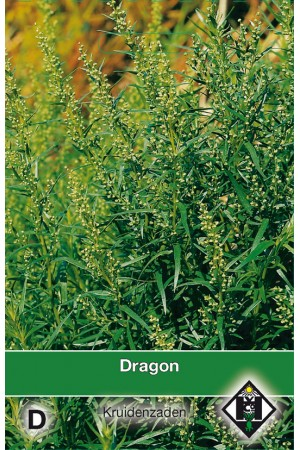 French Tarragon seeds