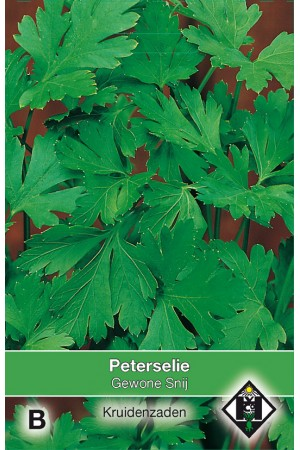 Plain leaved Parsley seeds