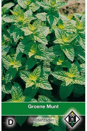 Meerjarige Groene munt zaden