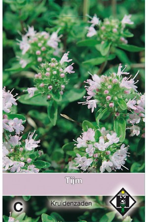 Thymus seeds