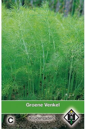 Groene Venkel zaden
