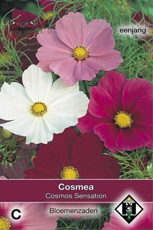 Sensation Cosmos Cosmea seeds