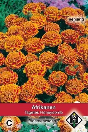 Honeycomb  African Marigold...