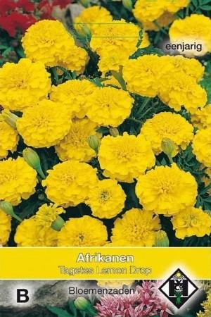 Lemon Drop African Marigold...