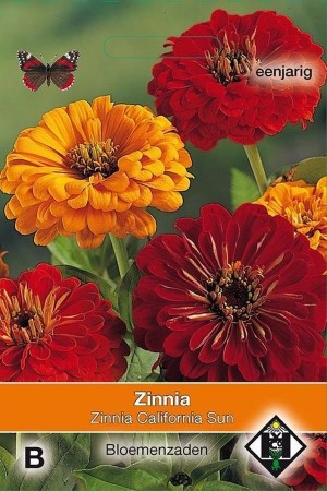 California Sun Zinnia seeds