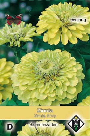 Envy Zinnia seeds