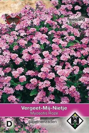 Pink Forget-me-not Myosotis...