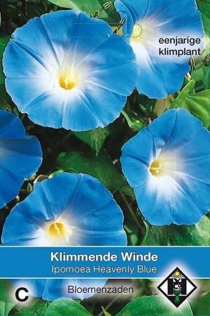 Heavenly Blue Klimmende...