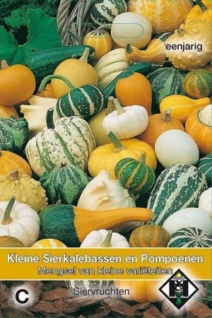 Small Ornamental Pumpkins...
