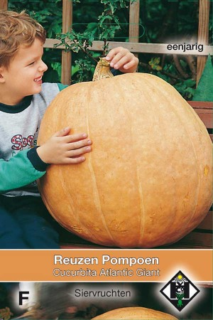 Altantic Giant Pumpkin seeds