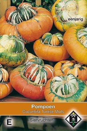 Turkish Turban Pumpkin seeds