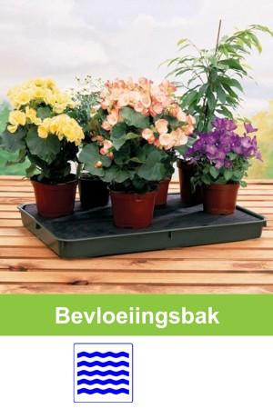 Self Watering green plant...