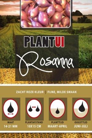 Rosanna pink onion sets 250g