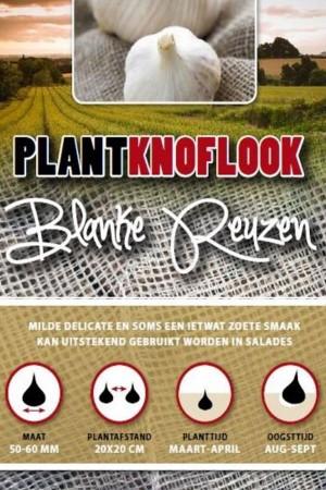Garlic sets Blanke Reuzen 5...