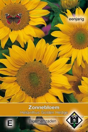 Golden Hedge Sunflower...