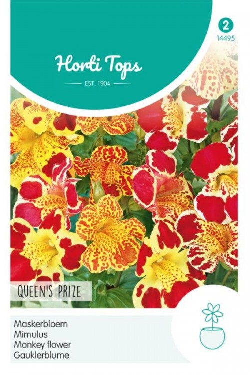 Queens Prize Monkey-flower seeds