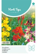 Fair lady - Wall flower seeds