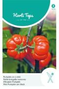 Ethiopian Eggplant Solanum aethiopicum seeds