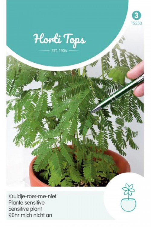 Sensitive Plant - Mimosa seeds