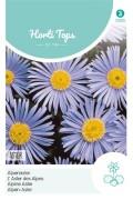 Blue Alpine Aster - Alpinus seeds
