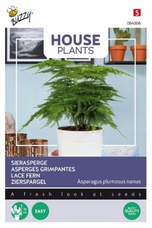 Asparagus Lace Fern seeds