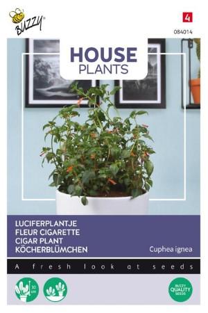 Luciferplantje Cuphea zaden