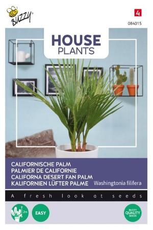 Californian palm seeds