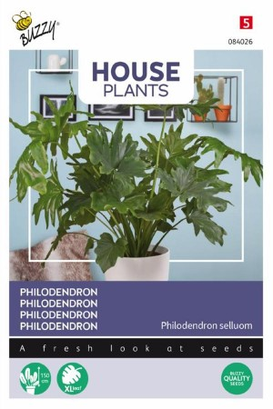 Philodendron selluom zaden