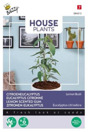 Lemon Bush Eucalypthus zaden