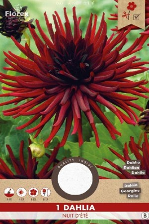 Dahlia Nuit d'ete darkred -...