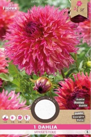 Dahlia Myrtle's Folie roze...