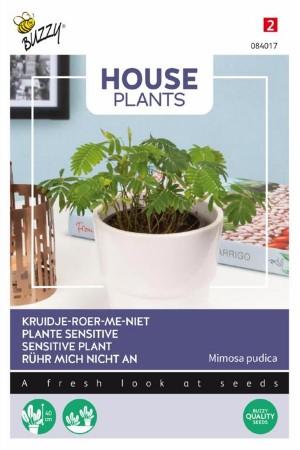 Sensitive plant Mimosa...