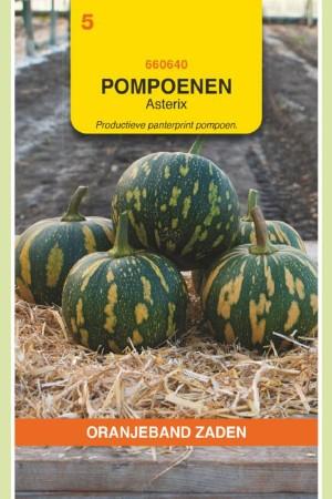 Asterix Pumpkin seeds