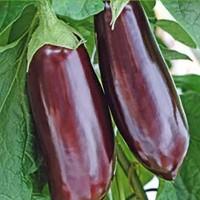Aubergine Eggplant - Fruit crop Vegetable seeds • Tuinzaden.eu