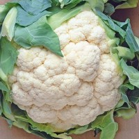 Cauliflower - Koolgroente Vegetable seeds • Tuinzaden.eu