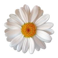 Flower seeds - Seeds • Tuinzaden.eu